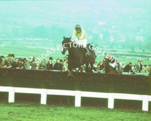 Royal Frolic with J Burke (675-03)